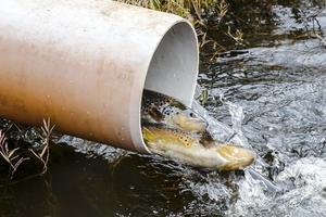 Bristvara? När Bengt Åströms fiskodling stänger kan det bli brist på odlad öring till Härjedalens fiskevatten.