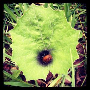 En larv i ett blad. Kan räcka för att bli vackert.
