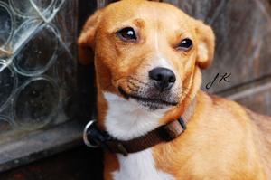 Det här är molly. En väldigt blyg hund som är rädd för allting!