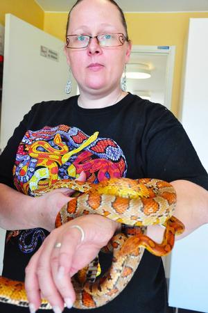 Mia Eriksson här med ormarna Gollum (den något ljusare) och Bentley (något mörkare). Hon började själv som kund men föder nu upp ormar själv. Hon delade även ut diplom till de barn som vågade klappa någon av ormarna.
