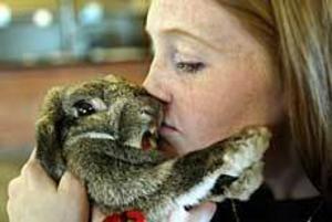 Foto: LASSE HALVARSSON Peppar. Kaninen Marie var inte riktigt på humör för att tävla trots matte Annelie Hörbergs omsorger.