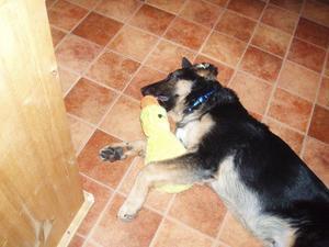 Zeb vilar ut efter ett träningspass med ankan