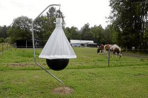 Lugnare bete. Lena Snells tre hästar betar betydligt lugnare i hagen sedan bromsfällan sattes upp. Det är även lättare för hästarna att fokusera när de blir ridna på ridbanan intill och slipper bli bitna av ettriga broms. Foto: Åsa Eriksson.