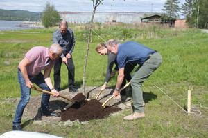 Vårdträdet planteras underkunnig ledning.