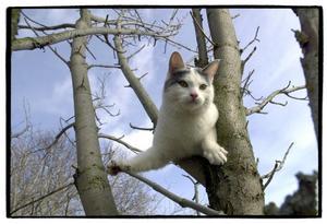 De flesta kattägare månar om sina katter, men tänker inte alltid på att andra kanske inte är lika förtjusta i de fyrbenta liven. Håll efter dem, så lever de tryggare. Foto: Mikael Hellsten
