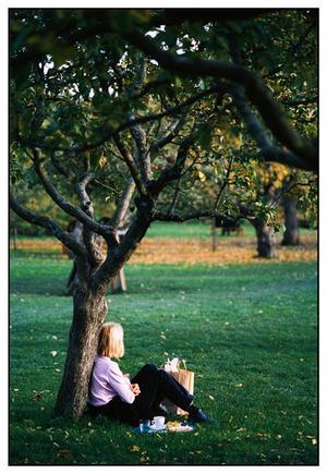 En vacker dag vid Rosendals Trädgårdar. Foto: Scanpix