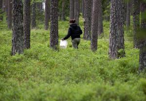 Allemansrätten är en unik sedvanerätt som ger oss alla rätt att vistas i naturen.