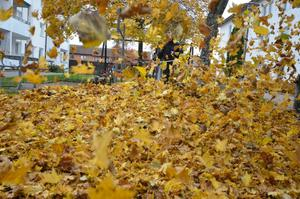 Löv, löv och åter löv hör hösten till.