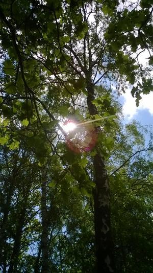 Där jag bor finns ett vackert skogsområde och dit jag går i stort sett varje dag. Jag kallar det min lilla skog.