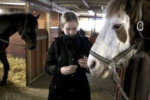 Kollar flåset. Emma Brandt kollar andningen på hästen Preben. Tolv andetag i minuten är allt frid och fröjd med hästen.