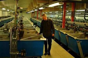Nyinvesteringar i bland annat intag för kallvatten, fler bassänger för avelsfisk och reningsanläggning för utgående vatten krävs. Foto: Ingvar Ericsson