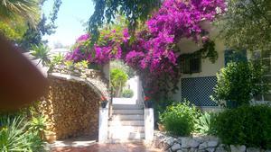 Blommor och grönt i ett soligt Spanien.