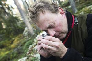 Henrik Weibull tror att han kommer hitta ungefär 120 olika arter av mossa på de fyra platser utanför Hassela som undersöks.