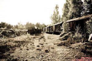 Var ute och åkte och hitta dessa tåg ute i skogen.