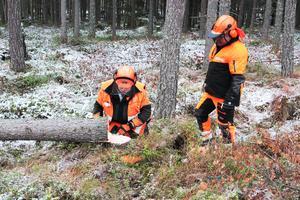 Läraren Tony Hansson, till vänster, kollar resultatet av Bror Alnehems trädfällning.