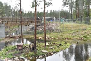 Även en familj befann sig i hägnet när björnen attackerade den 18-årige djurskötaren. De lyckades fly över stänglset och därmed undkomma attacken.