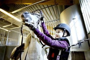 Stig Vig är hela 27 år gammal och den äldsta ponnyn i klubben.