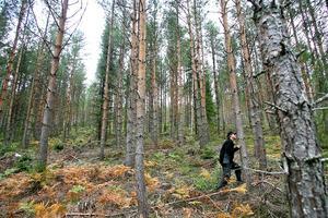 Jonas Olinder är nyanställd bränsleinspektor i Mellanskog. Han har dock många år i branschen. Här inspekterar han ett skogsparti där klippskördaren gjort rent på busk och sly.
