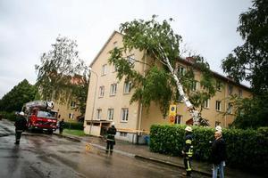 Inga människor kom till skada när trädet föll in i Gavlegårdarnas hyreshus på Hantverkargatan.