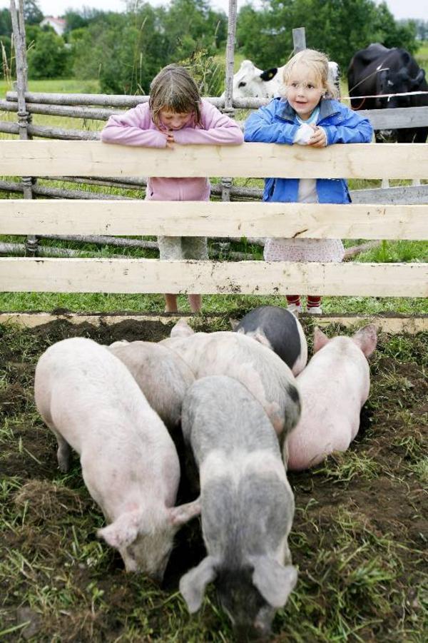 """Felicia Broberg, 7 år och Emma Olofsson, 6 år går runt och kollar på alla djuren. """"De små grisarna är gulliga, men den stora pratade med oss hela tiden"""", säger sexåriga Emma Olofsson.   Foto: Henrik Flygare"""