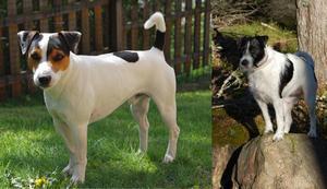 Familjen Kvistlunds två hundar, Tiger och Vilja gick en hemsk död till mötes när bilen de befann sig i fattade eld.