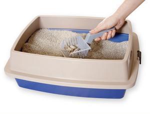 Kostnader tillkommer när väl katten är på plats. Kattsand och kattlåda är ett måste.