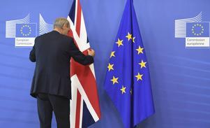 Erika Sörengård, partiordförande för Landsbygdspartiet oberoende, vill efter Storbritanniens beslut om utträde ur EU se samma process i Sverige.