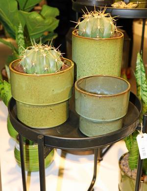 Kaktusar har vi sett en tid. Den retrogröna krukan känns mycket 70-tal.