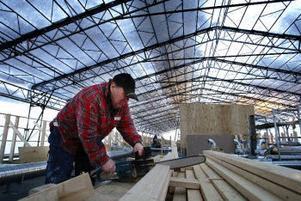 Arbetet med att bygga nytt tak och ventilationssystem är tidskrävande men snabbas på tack vare det takskydd som monterats upp. Lennart Näslund sågar till takstolsstolpar.