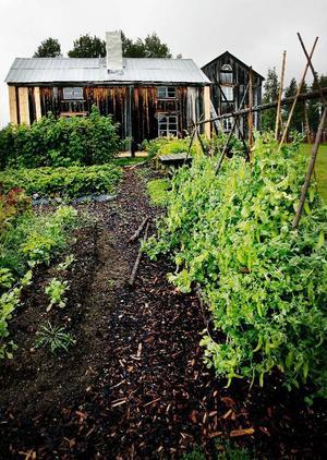 I köksträdgården bakom födorådsstugan växer det så det knakar.