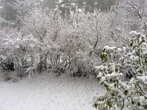 Snö i Odensala:
