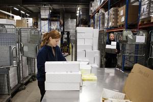 Säsongsjobbarna Sara Wedin, 24 år, och Malin Hallin, 23 år, klistrar namnetiketter på de färdigpackade paketen.