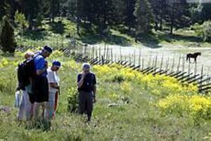 Foto: LASSE HALVARSSON Blomrikt. Peter Ståhl, till höger, pekar ut vilda blommor för deltagarna i blomstervandringen som genomfördes i Hemlingby på söndagen.