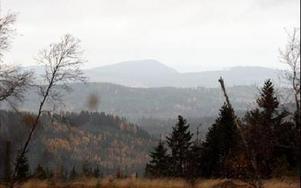 På måndag blir det säkert annat ljud i skällan i skogarna runt om i kommunen.FOTO:LEIF OLSSON