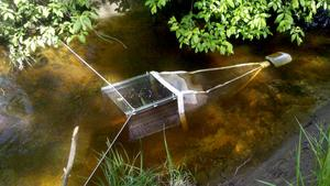 Yngelfälla i Järvstabäcken. I den nu kanaliserade bäcken produceras mycket få yngel. Om bäcken åter kan få omgivningar som svämmas över på våren under fiskens lektid kan mängden yngel som produceras öka flera gånger om.