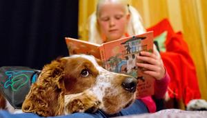 Läs för en hund. Svenska terapihundskolan deltar på Littera-lajk. Prova att läsa för en kompis som aldrig rättar eller slutar lyssna. Hunden Cocos bor och jobbar i Falköping. (Arkivfoto: Adam Ihre/tt