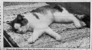 ST 25 juni 1991.