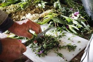 Blommorna hackas och lägg i burkar, där de ska syras.