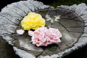 Dekorativt med rosor som flyter i vatten i ett