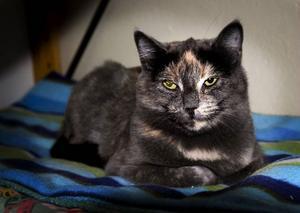 Just nu finns 40 katter på Djurskyddets katthem och pensionat i Östersund. De flesta verkar ta det ganska lugnt.