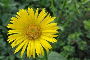 Sommarens sista blomma.