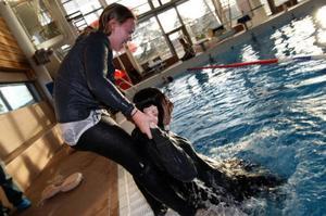 Det är inte alldeles enkelt att få upp en fulltung manlig person ur vattnet för att kunna påbörja hjärt – och lungräddningen. Malin Duberg får ta i.Foto: Håkan Degselius