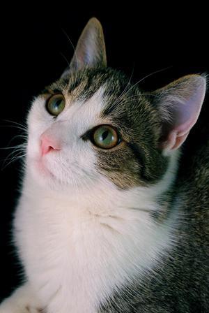 Tzatziki, huskatt 2 år. Ägare: Elina Hoffman, Längshyttan