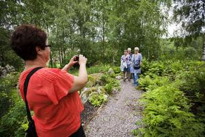 Irene Alm fotograferar Marita Westerlund, Christina Norlin och Christina Andersson.– Helt otroligt, är deras omdöme om trädgården.