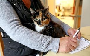 Vips hoppar katten Lotta upp i knäet och flirtar med besökare. Väldigt social är hon. Foto: Johnny Fredborg