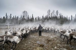 Det är dags att låta samerna ta plats, skriver Linus Eriksson.