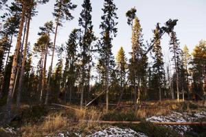 Som väntat var Strömsund en av de kommuner där skogen drabbades hårdast av stormen Hilde.