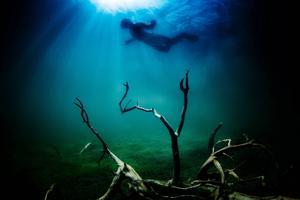 Vattnet i Balestjärn är klart och landskapet några meter under ytan dramatiskt och annorlunda. Även den som snorklar uppe vid ytan kan se såväl fiskar som mängder av nedfallna träd.
