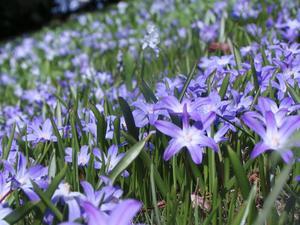 Koppla av. Njut av våren, ta ut en stol och spana in de tidigaste blomstren.