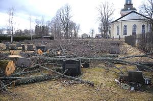 """Skövling. Avverkningen av träden på Folkärna kyrkogård har rört upp känslor. """"Man får en massakerkänsla"""", säger Vanja Karlsson som har anhöriga som är begravda på kyrkogården."""